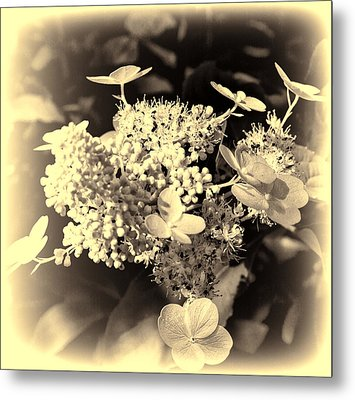 white flower SV Metal Print