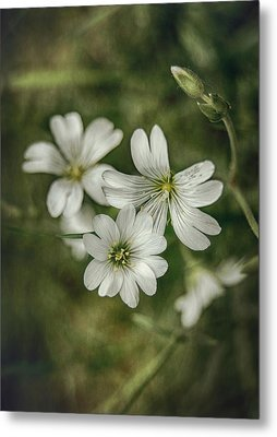 White Flowers Metal Print by Gynt