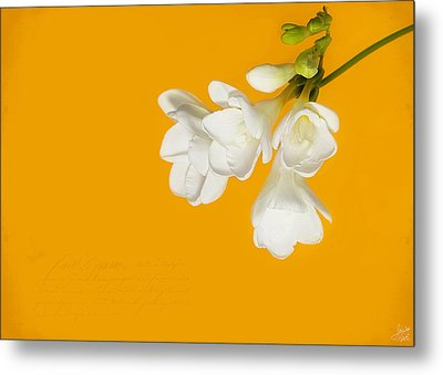 Metal Print featuring the photograph White Flowers On Tangerine Study by Lisa Knechtel
