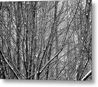 White Forest Metal Print