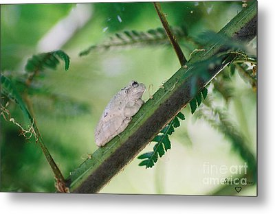 Metal Print featuring the photograph White Frog by Donna Brown