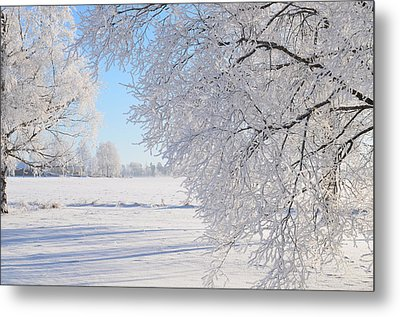 White Frost Metal Print by Conny Sjostrom