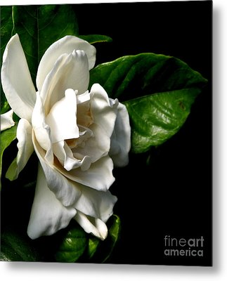 Metal Print featuring the photograph White Gardenia by Rose Santuci-Sofranko