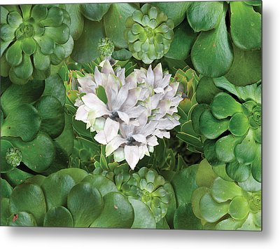 White Green Flower Metal Print by Alixandra Mullins