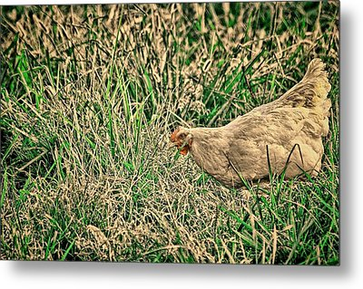 White Hen Art Metal Print