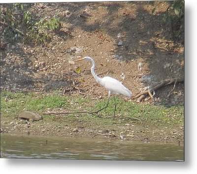 Metal Print featuring the photograph White Heron by Eric Switzer