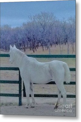 White Horse At Dusk Metal Print by Ronnie Glover