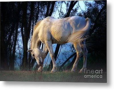 Metal Print featuring the photograph White Horse In The Early Evening Mist by Nick  Biemans