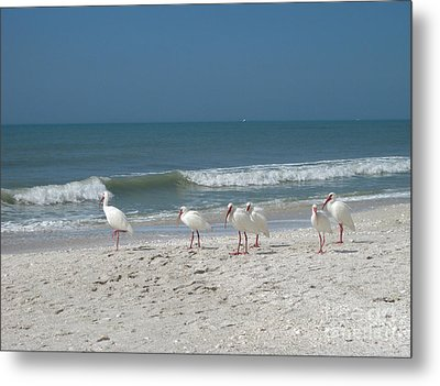 White Ibis In Naples Florida Metal Print by Heidi Hermes