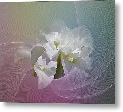 Metal Print featuring the photograph White Iris by Judy  Johnson
