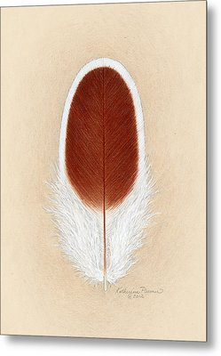 White Laced Red Cornish Feather Metal Print
