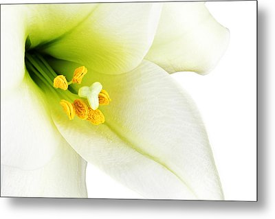 White Lilly Macro Metal Print by Johan Swanepoel