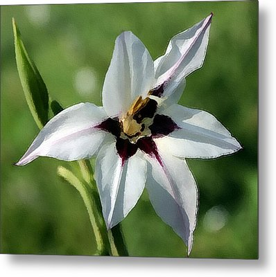 Metal Print featuring the photograph White Lily - A Beauty by Ellen Tully