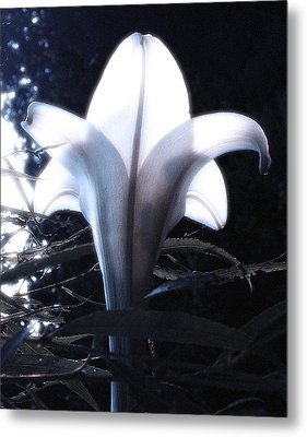 White Lily By Jan Marvin Metal Print