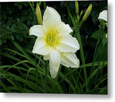 White Lily Metal Print by Catherine Gagne