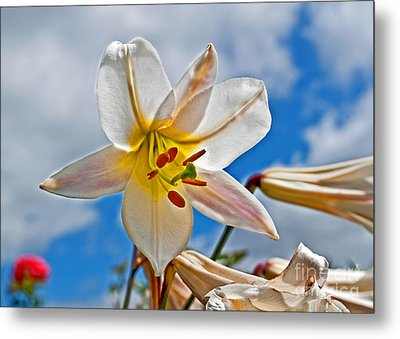 White Lily Flower Against Blue Sky Art Prints Metal Print