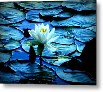 White Lily Metal Print by Maria Scarfone