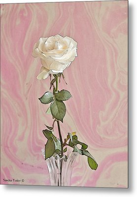Metal Print featuring the photograph White Long Stemmed Rose by Sandra Foster