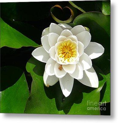 White Lotus Heart Leaf  Metal Print
