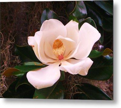 White Magnolia Metal Print by Yolanda Rodriguez