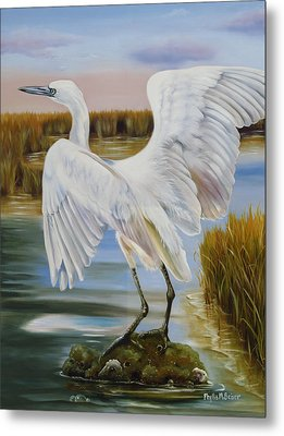 White Morph Reddish Egret At Creole Gap Metal Print by Phyllis Beiser