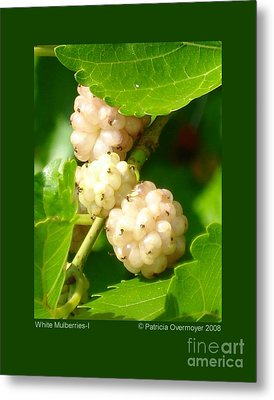 White Mulberries-i Metal Print by Patricia Overmoyer