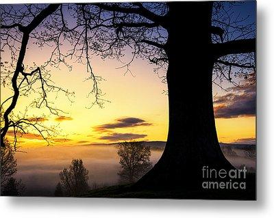 White Oak At Sunrise Metal Print by Thomas R Fletcher