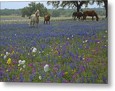 Metal Print featuring the photograph White On Blue by Susan Rovira