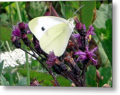 White On Purple On Green Metal Print by Robert Lance