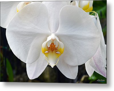Metal Print featuring the photograph White Orchid by Aloha Art