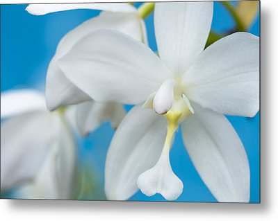 White Orchid Metal Print by Leigh Anne Meeks