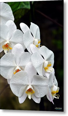 Metal Print featuring the photograph White Orchids After The Rain by Aloha Art