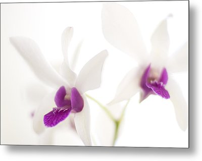 Metal Print featuring the photograph White Orchids by Bradley R Youngberg