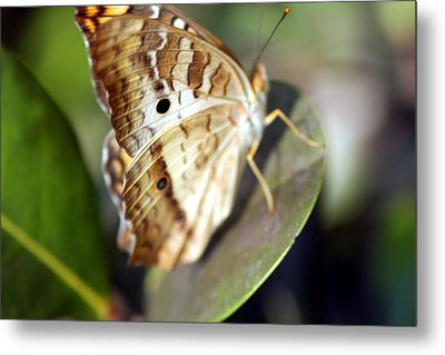 Metal Print featuring the photograph White Peacock Butterfly by Greg Allore
