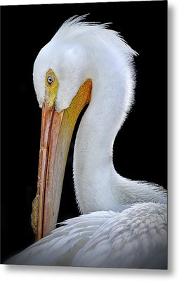 White Pelican Metal Print
