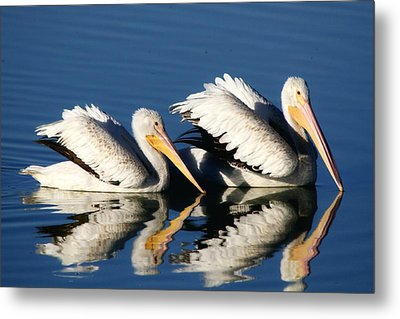 White Pelican Pair Metal Print