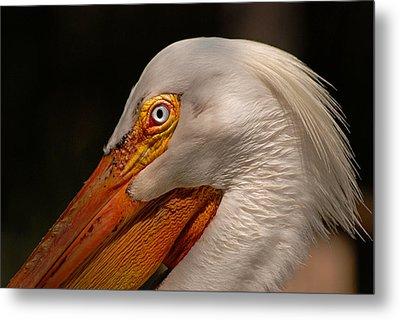 White Pelican Portrait Metal Print