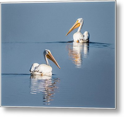 Metal Print featuring the photograph White Pelicans by Patti Deters