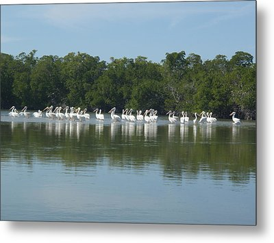 Metal Print featuring the photograph White Pelicans by Robert Nickologianis