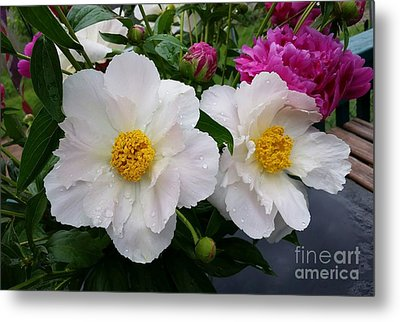 Metal Print featuring the photograph White Peony Flower by Rose Wang