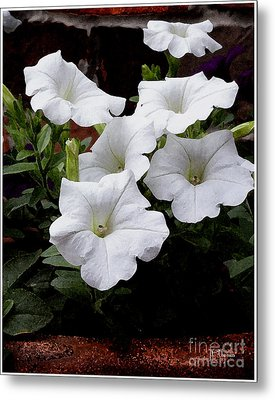 Metal Print featuring the photograph White Petunia Blooms by James C Thomas