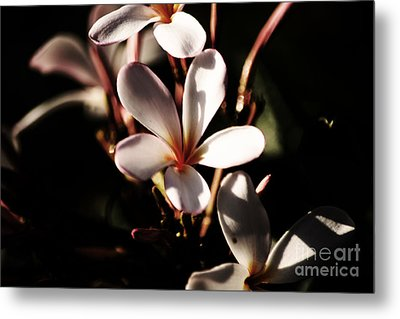 Metal Print featuring the photograph White Plumeria by Angela DeFrias