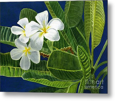White Plumeria Flowers With Blue Background Metal Print