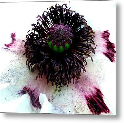 White Poppy Macro Metal Print