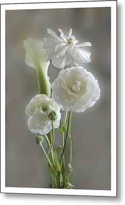 White Ranunculus  Metal Print by Geraldine Alexander