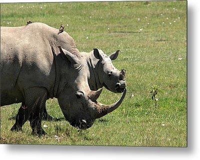 White Rhino Mother And Calf Metal Print by Aidan Moran