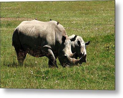White Rhinoceros Metal Print by Aidan Moran