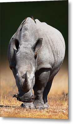 White Rhinoceros  Front View Metal Print