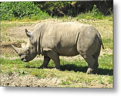 White Rhinoceros Grazing Metal Print by CML Brown