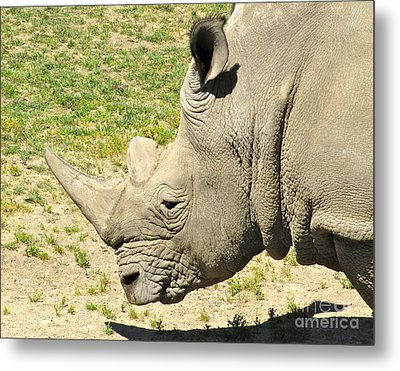 White Rhinoceros Portrait Metal Print by CML Brown